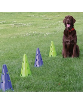 Dog Agility_Interval Exercise