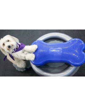 Ringo on the FitPAWS K9FITbone and Donut Holder