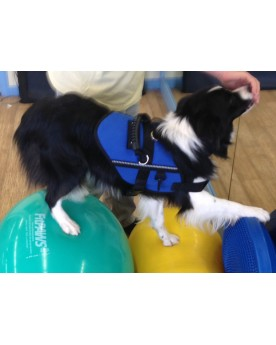Core Strength for Canine Fitness