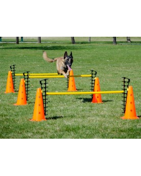 FitPAWS-Hurdle-Jump dog agility