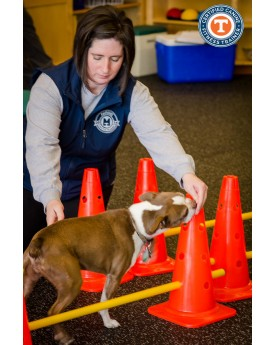 addestramento dog agility