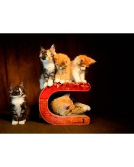 Le Tonneau Medium Tiragraffi in Cartone ondulato Cat-On