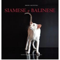 SIAMESE e BALINESE
