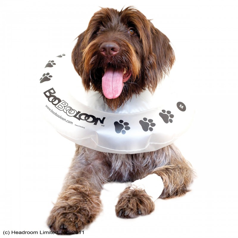 Boobooloon collare gonfiabile per cane medium for Amazon trasportini per cani