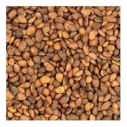 Cedar Nuts Medio Calibro 500gr