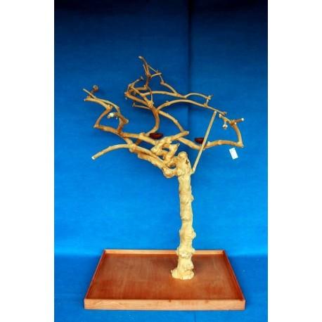 Coffee Tree AM 2175 - Trespolo Pappagallo