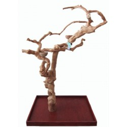 Coffee Tree Intagliato CM 7001 Medium