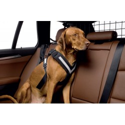 ALLSAFE MEDIUM - La Cintura di sicurezza crash-test per cani indossata