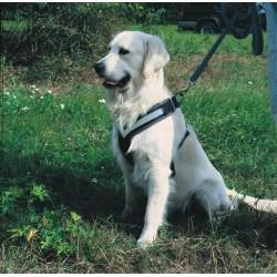 ALLSAFE MEDIUM - La Cintura di sicurezza crash-test per cani all'aperto