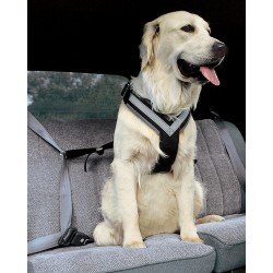 ALLSAFE LARGE - La Cintura di sicurezza crash-test per cani