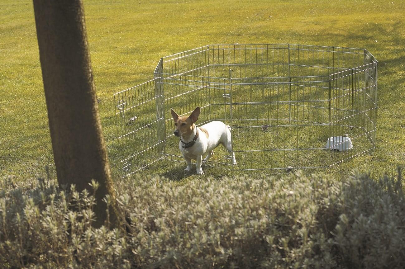 Recinzioni Per Cani Da Giardino: Recinto giardino per cani box ...