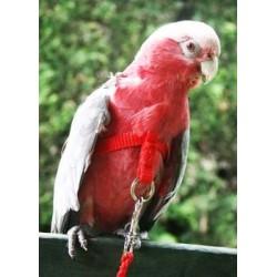 Guinzagliio Pappagallo Happy Bird SMALL
