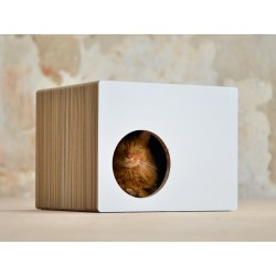 Phredia Eckhaus Cat-On Tiragraffi in Cartone Ondulato Medium