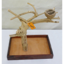 Trespolo Per Pappagallo in legno SMALL S3325V