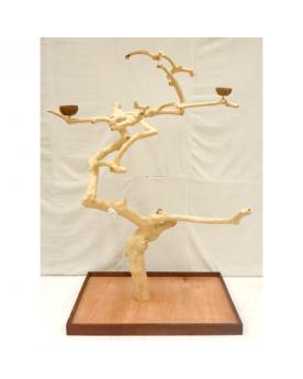 Coffee Tree AL 3039 XXXL -...