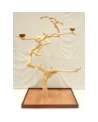 Coffee Tree AL 3030 XXL - Trespolo Pappagallo