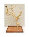 Coffee Tree AL 3038 XL  - Trespolo Pappagallo