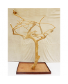 Coffee Tree AL 3048 - Trespolo Pappagallo