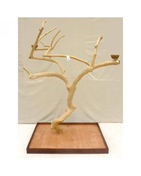 Coffee Tree AL 3036 -...