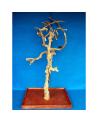 Coffee Tree AM 2172 - Trespolo Pappagallo