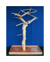 Coffee Tree AM 2123 - Trespolo Pappagallo