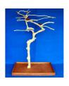 Coffee Tree AM 2176 - Trespolo Pappagallo