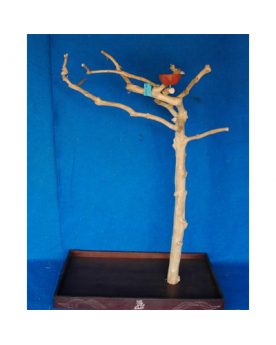 Coffee Tree BM5389 Mini Albero