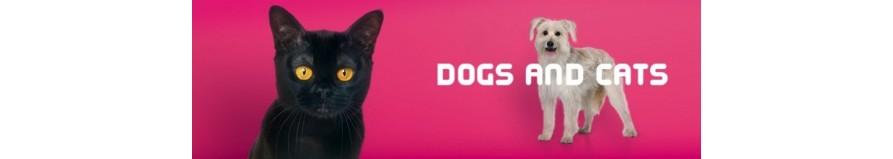 Vendita on-line di accessori ed attrezzature per cani.