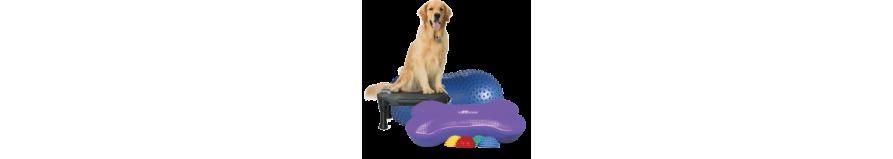 Fitness e dog agility con gli attrezzi giusti per il tuo cane.