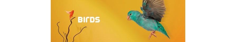 Gabbie per pappagalli ed uccellini, Voliere, Trespoli, Giochi, Mangimi