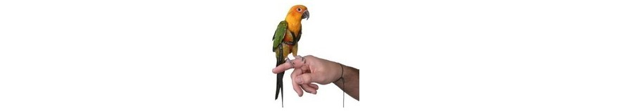 Pettorine per pappagalli, guinzagli, imbracature ed altri accessori